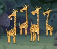 GOTJGiraffes
