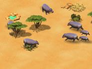 Hippopotamus-wonder-zoo