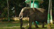 African-elephant-life-of-pi