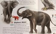 Endangerd Animals Dictionary Elephants