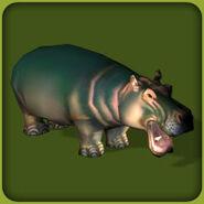 Hippopotamus-zoo-tycoon