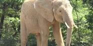 Pittsburgh Zoo Elephant