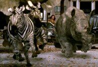 Jumanji 1995 Zebras