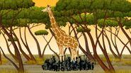 Giraffe-kirikou