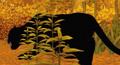 Kirikou Black Panther