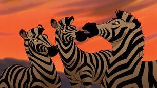 Plains-zebra-the-lion-king-2