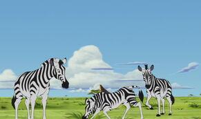Plains-zebra-the-lion-king-3