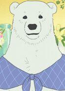 Polar-bear-37964