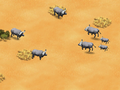 African-buffalo-wonder-zoo
