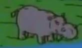 Hippopotamus-rugrats