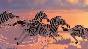 Plains-zebra-the-lion-king