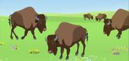 American-bison-wild-kratts