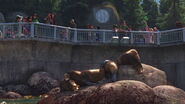 California-sea-lion-finding-dory
