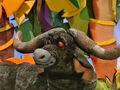 Travis-the-african-buffalo