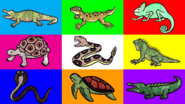 HED Reptiles