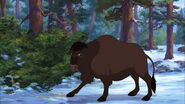 American-bison-brother-bear-2