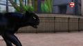 Miraculous Ladybug Panther