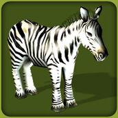 Plains-zebra-zoo-tycoon