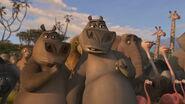 Hippopotamus-madagascar-2