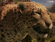 Leopard-the-chronicles-of-narnia