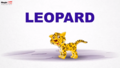 MagicBox Leopard