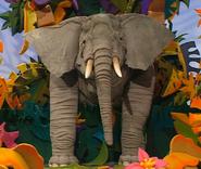 Ringo-the-elephant