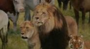 Evan Almighty Lions