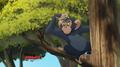 Chimpanzee-the-lion-guard