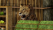 MAD Leopard