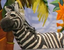 Randall-the-zebra