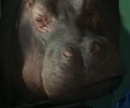 Hippopotamus-night-at-the-museum