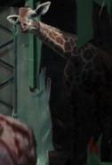Giraffe-night-at-the-museum