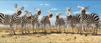 Plains-zebra-animals-united