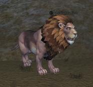 A savanna lion