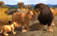 Lion-wildlife-park