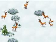 Reindeer-wonder-zoo