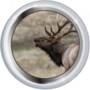Intermediate Mammalogist II