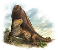 Art impression of Dimetrodon
