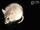 Kreb's Fat Mouse