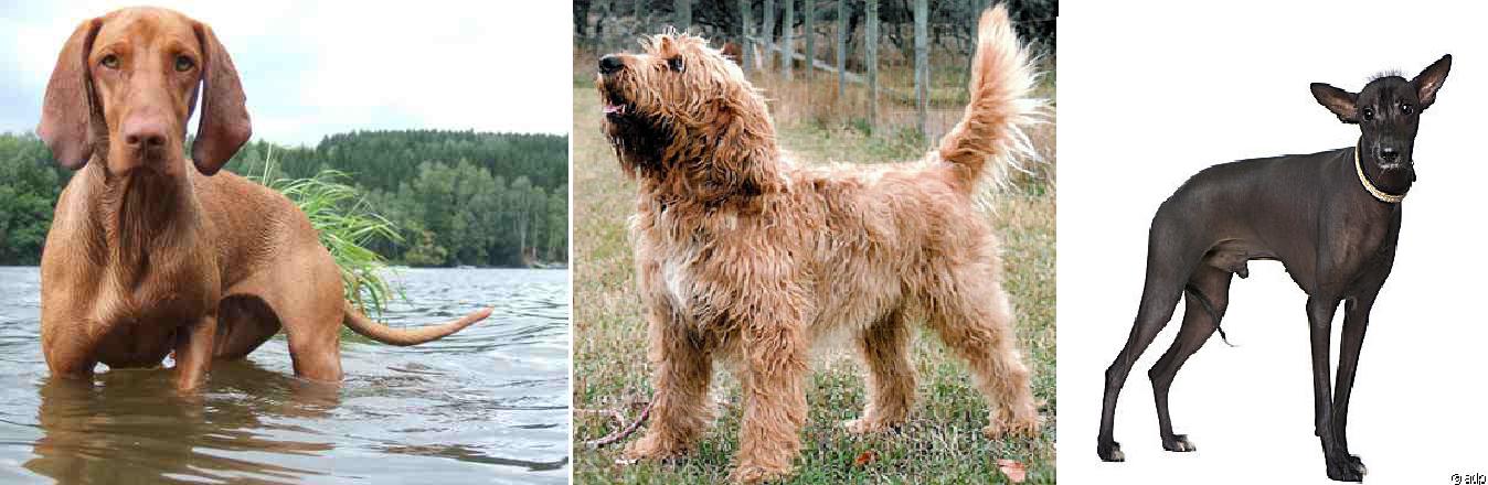 Vulnerable Dog Breeds