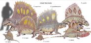 Dimetrodon species