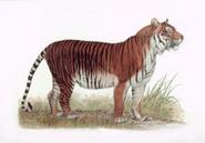 Javan Tiger illustration