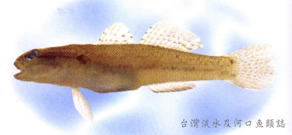 Bare-naped Goby
