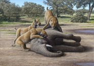 Art reconstruction of Homotherium pack eating