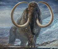 Illustration of a male Woolly Mammoth in Alaska