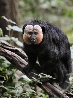 New-monkey-species-amazon-1-s1533x2048-p.jpg