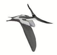 Life restoration of a male Pteranodon longiceps