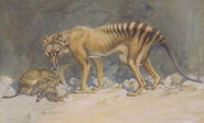 Thylacine with pups