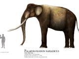 Palaeoloxodon