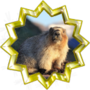 Advanced Mammalogist II